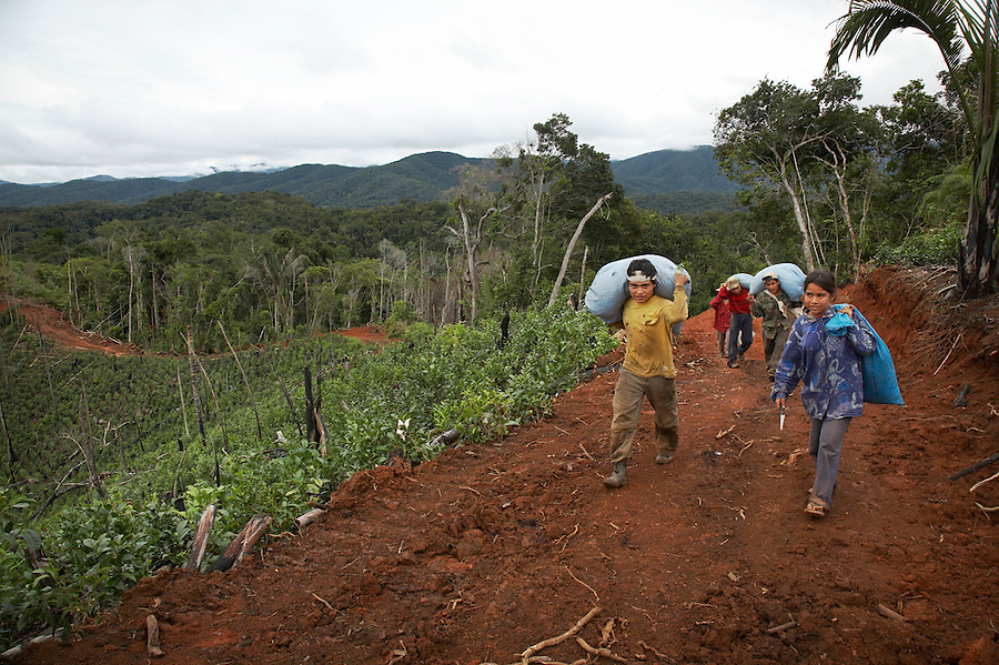 Tea pickers working in the mountains above Chimate, a small community in the fertile Yungas region of Bolivia.