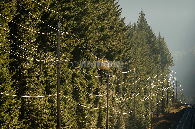 Transmission lines running through the forest.