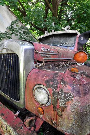 Old and abandoned Mack heavy truck under a maple tree with dried leaves and twigs across the fender, a B-62 XS model with Thermodyne engine.