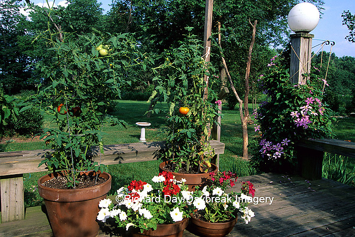 63821-04315 Container garden on deck tomatoes and petunias Marion Co.   IL