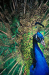 Bird Behavior