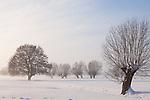 Europa, DEU, Deutschland, Nordrhein Westfalen, NRW, Rheinland, Niederrhein, Alpen-Menzelen, Schnee, Winter, Baeume, Typische Kopfweiden, Kategorien und Themen, Natur, Umwelt, Landschaft, Jahreszeiten, Stimmungen, Landschaftsfotografie, Landschaften, Landschaftsphoto, Landschaftsphotographie, Wetter, Wetterelemente, Wetterlage, Wetterkunde, Witterung, Witterungsbedingungen, Wettererscheinungen, Meteorologie, Wettervorhersage....[Fuer die Nutzung gelten die jeweils gueltigen Allgemeinen Liefer-und Geschaeftsbedingungen. Nutzung nur gegen Verwendungsmeldung und Nachweis. Download der AGB unter http://www.image-box.com oder werden auf Anfrage zugesendet. Freigabe ist vorher erforderlich. Jede Nutzung des Fotos ist honorarpflichtig gemaess derzeit gueltiger MFM Liste - Kontakt, Uwe Schmid-Fotografie, Duisburg, Tel. (+49).2065.677997, ..archiv@image-box.com, www.image-box.com]