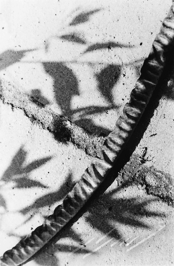 Shadows of a tree casted on outdoor tiles where the gardening hose made an interesting composition of the whole scene.