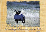 Inspirational image of a bull elk bugling in Estes Park, CO