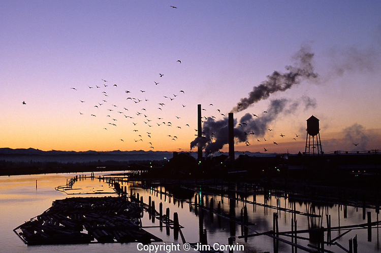 Sunrise over slough with silhouetted pilings and lumber on waterway with water tower, Everett, Washington State USA.