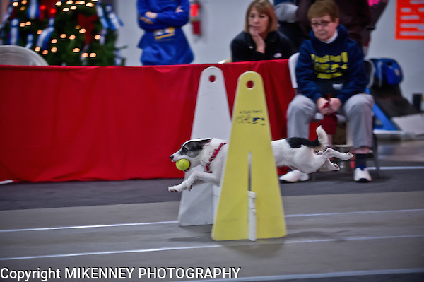 2013 Santa Paws Flyball tournament held December 7,8 at Boomtowne Canine Campus in Farmington, NY