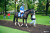 Formal N Fast before The Fegentri Amateur Riders Club of America Race at Delaware Park on 10/3/15