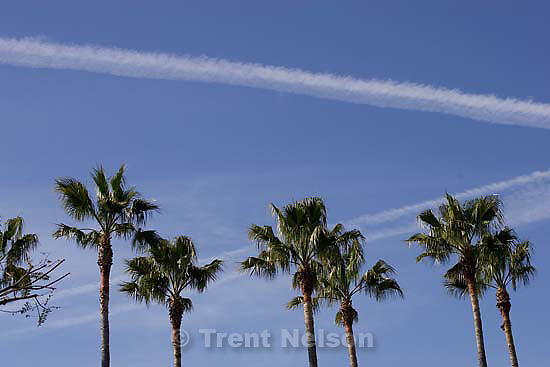 palm trees and clouds.Sunday April 19, 2009 in Los Angeles.