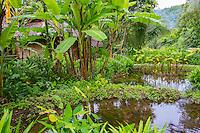Thailand, Mae Hong Son. Fern Resort.