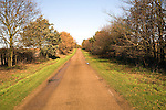 Quiet country road in autumn lined with trees and bushes