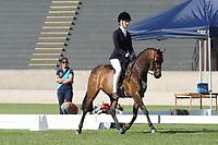 Graduate Large Pony