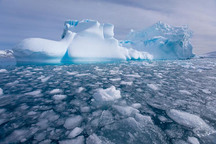 Icebergs and pancake ice in Lindblad Cove, Antarctica