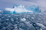 Icebergs and pancake ice in Lindblad Cove, Antarctica
