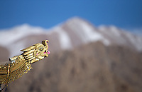 A decorative dragon, adorning a roof corner, looks out at the Himalayas.