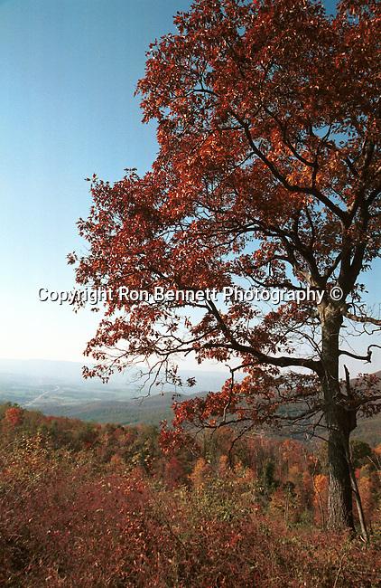 Autumn on Sky Line Drive Virginia, Fine Art Photography by Ron Bennett, Fine Art, Fine Art photography, Art Photography, Copyright RonBennettPhotography.com ©