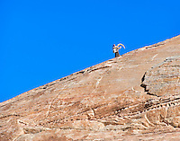 A Desert Bighorn Sheep peeks over the cliff at Valley of Fire State Park in Nevada.