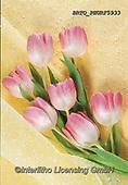 Alfredo, FLOWERS, BLUMEN, FLORES, paintings+++++,BRTOPHURF5933,#f#, EVERYDAY