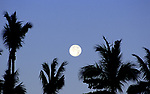Full moon rise and palm trees in Baja Mexico