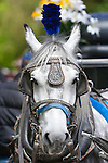 Horse and carriage, Central Park, New York, USA
