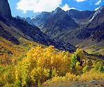 USA, California, Sierra Nevada Mountains.   Fall colors of aspen trees in the McGee Creak Area. Credit as: Christopher Talbot Frank