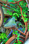 Bikes rusting in undergrowth