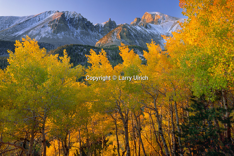 Aspens and Wheeler Peak<br />
