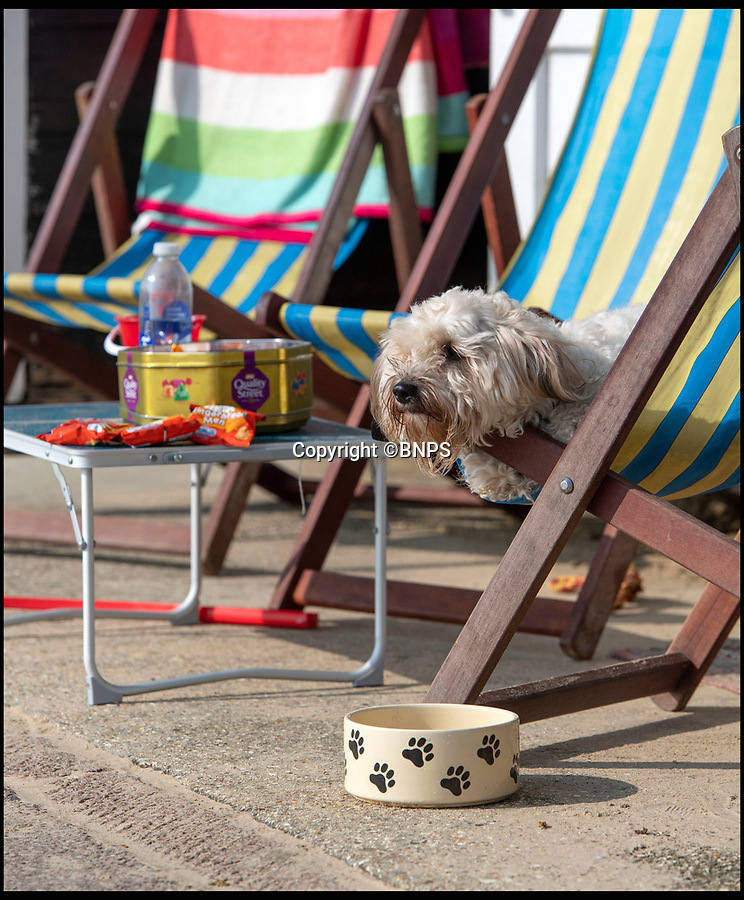 BNPS.co.uk (01202 558833)<br /> Pic: PhilYeomans/BNPS<br /> <br /> Laid back pooch bags some rays...<br /> <br /> First warm weekend of the year had the crowds shaking off the winter blues on Bournemouth seafront this weekend as the sun shone.