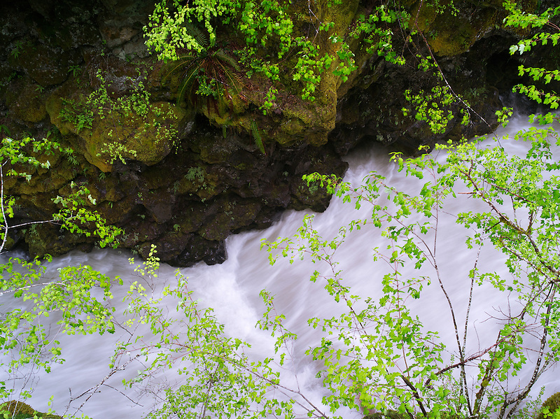Whitewater on Rogue River with new spring growth, Oregon
