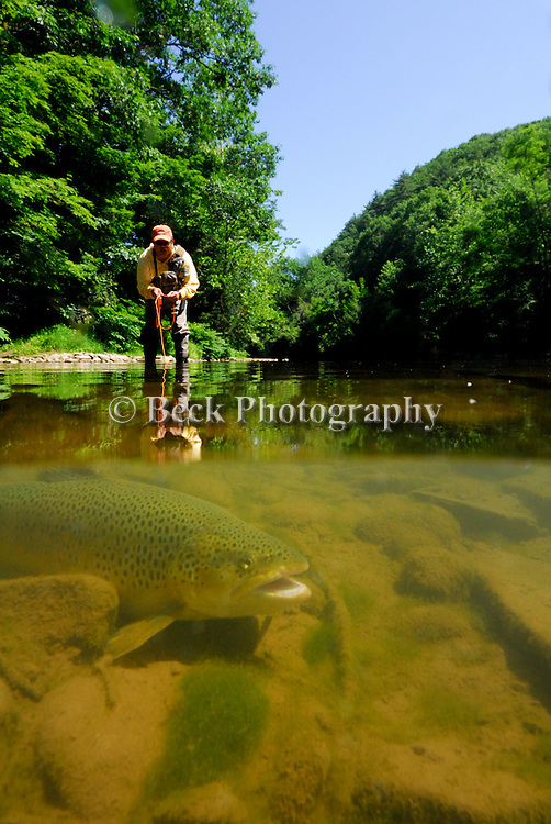 UNDERWATER FLY FISHING FOR BROWN TROUT