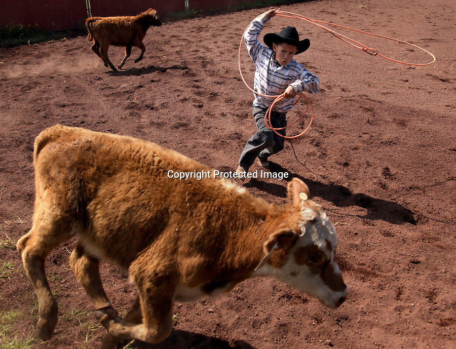"""A participant in the """"Keiki Rodeo"""" (Children's Rodeo) competes in the calf roping competition at Parker Ranch arena in Waimea, HI.  Many of the cowboy's children grow up roping and riding from a very young age.  """"Kamehana was one year and one month old when she first rode a horse around the barrels.  I had to tie her down with a rope so she wouldn't fall off,"""" says Wayne Tachera of his oldest daughter's early riding exposure."""
