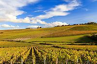 France, Yonne(89), Préhy, dans les vignes en automne, église Notre-Dame // France, Yonne, Prehy, in the vineyards in autumn, Church of Our Lady