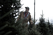"November 24, 2008. Rural Virginia.. Different types of Frazier fir trees grow in a tree lot just over the border in Virginia from Ashe County, NC..  Farmer Robertson looks over the trees to see which types might be best for his retail Christmas tree farm.. The types have been separated on the farm, to test which families of trees, from slightly different areas of the state, grow the ""best"" to be sold commercially. The project is sponsored by NC State University, which does many experiments with tree types at the School of Forestry.."