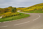 The Route du Vin in the Alsace region, France,