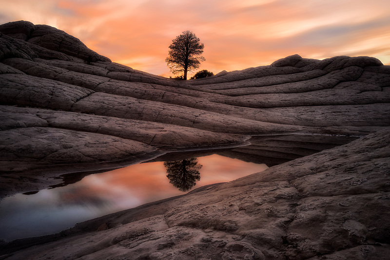 Tree reflecttion at the White Pocket. Vermilion Cliffs National Monument, AZ