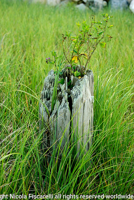 View of a weathered post in the grassy dune of Cape Cod.