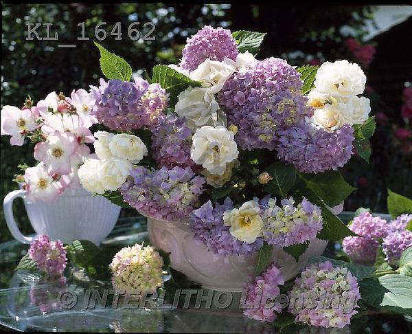 Interlitho, FLOWERS, BLUMEN, FLORES, photos+++++,flowers,violet,KL16462,#F#