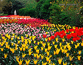 Tom Mackie, FLOWERS, photos, Tulip Gardens in St. Jame's Park, London, England, GBTM955309-1,#F# Garten, jardín