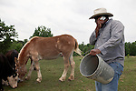May 22, 2010. Baskerville, Virginia.. John Boyd, Jr. taked a call as he feeds the cattle, and mule, named 40 Acres,  on his farm that has been in the family for over 100 years. . Dr. John Boyd, Jr., a Virginia farmer, has lobbied the White House and Congress for the better part of two decades on behalf of black farmers. .A $1.25 billion settlement he helped to negotiate in February for the federal government to compensate black farmers has become ensnared in Washington. .Meanwhile, many elderly farmers who stand to benefit are dying before they can seek restitution..Their case, known as the black farmers settlement, and commonly referred to as Pigford II, is the second phase of a federal lawsuit settled in 1999. It covers more than 80,000 farmers who claim they were denied critical aid comparable to what white farmers received from the Department of Agriculture between 1981 and 1996 because of the color of their skin..Congress reopened the case in 2008, and set aside $100 million to address the late claims. President Barack Obama, who co-sponsored the 2008 measure when he was in the Senate, created a $1.15 billion line item in his budget for the 2010 fiscal year to cover the new class of litigants..The money was less than half of the $2.5 billion the farmers had fought for, but the administration's promise of a quick resolution prompted them to accept the deal.  .