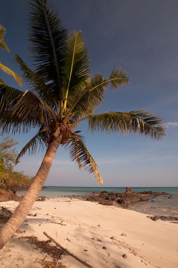 Coconut Palm at Devil's Beach, Turtle Island, Yasawa Islands, Fiji