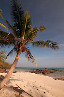 Coconut Palm at Devil's Beach, Turtle Island, Yasawa Islands, Fiji