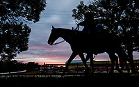 BALTIMORE, MD - MAY 12: Kentucky Derby winner Always Dreaming heads to the track with a lead pony to exercise in preparation for the Preakness Stakes next week at Pimlico Race Course on May 12, 2017 in Baltimore, Maryland.(Photo by Scott Serio/Eclipse Sportswire/Getty Images)