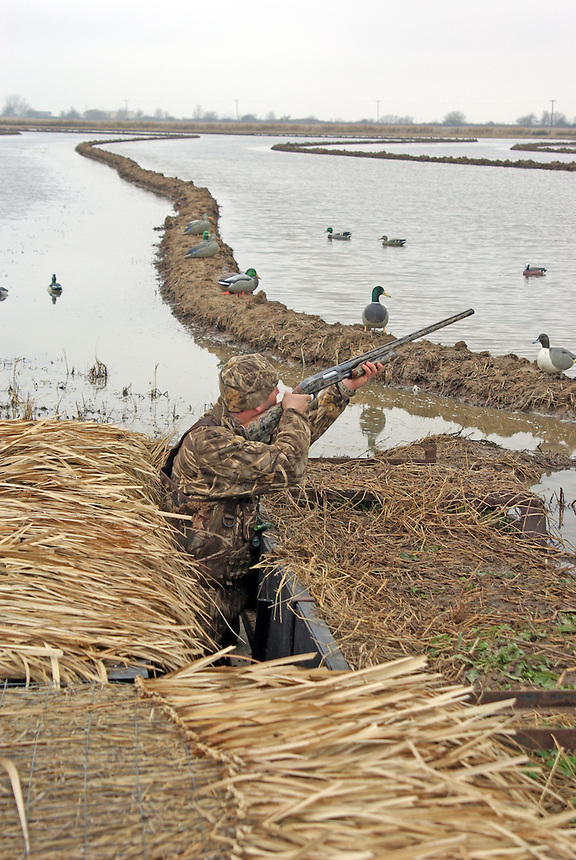Duck hunter aiming from pit blind, Stuttgart, Arkansas