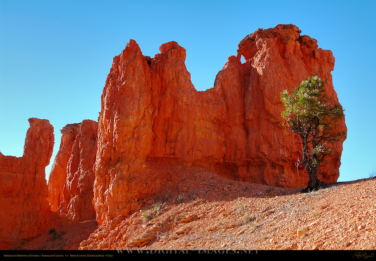 Iridescent Hoodoo at Sunrise, Fairyland Canyon, Bryce Canyon National Park, Utah