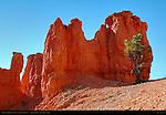 Iridescent Hoodoo at Sunrise, Fairyland Canyon, Bryce Canyon National Park, Utah