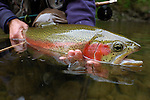 Rainbow Trout ready for release