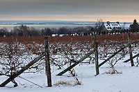 Amérique/Amérique du Nord/Canada/Québec/ Env de Québec/Île d'Orléans: Le Vignoble sous la neige  et en fond le Golfe du Saint-Laurent