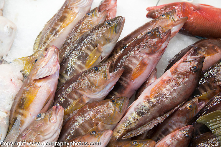 Fresh fish on sale at fishmongers at Playa Blanca, Lanzarote, Canary Islands, Spain