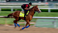 LOUISVILLE, KY - MAY 02: Justify works out on the track in preparation for the Kentucky Oaks at Churchill Downs on May 2, 2018 in Louisville, Kentucky. (Photo by Sydney Serio/Eclipse Sportswire/Getty Images)