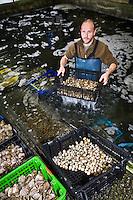 Europe/France/Bretagne/29/Finistère/ Kerdruc: La Cabane aux Coquillages- Nicolas Salaun propose huîtres, plates ou creuses, charnues et noisetées, affinées dans l'Aven, moules, coques, bigorneaux, palourdes grises ou roses au goût iodé
