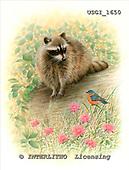GIORDANO, REALISTIC ANIMALS, REALISTISCHE TIERE, ANIMALES REALISTICOS, paintings+++++,USGI1650,#A# raccoon